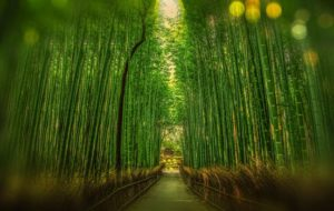 pathway through a green forest